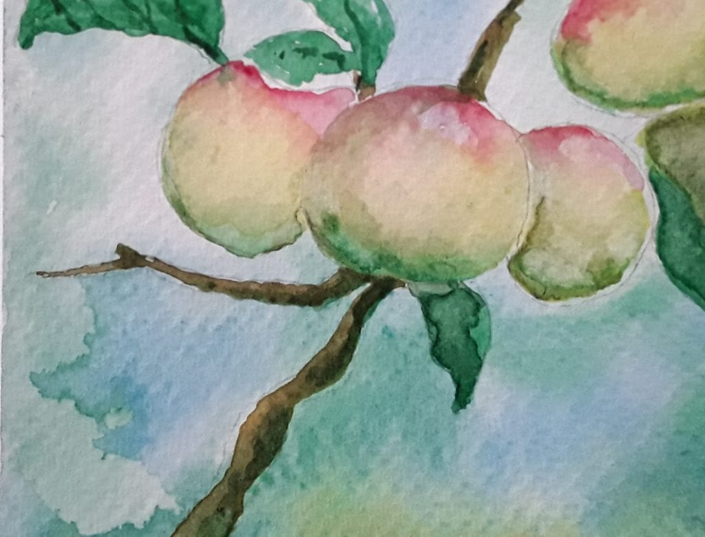 Watercolour painting of apples